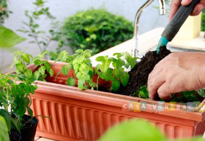 how-to-grow-mint3