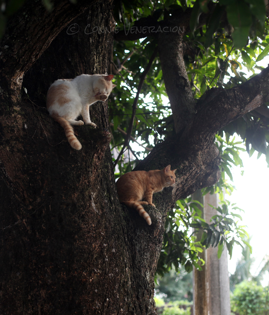 cats-in-tree