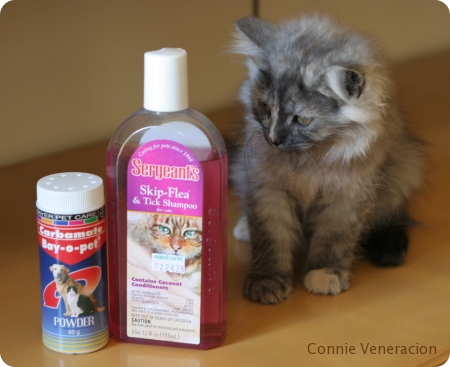 cat and kitten flea and tick powder and shampoo