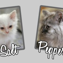Introducing Salt and Pepper