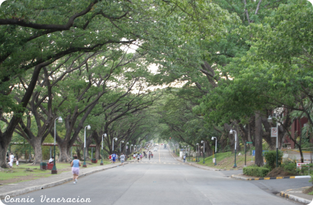 joggers on the academic oval