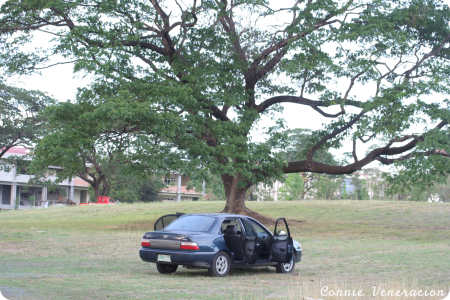 car under the tree