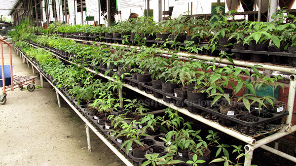 Casaveneracion.com Potted Herbs For Sale