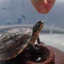 Hey, Mr. Turtle, what's your name again?