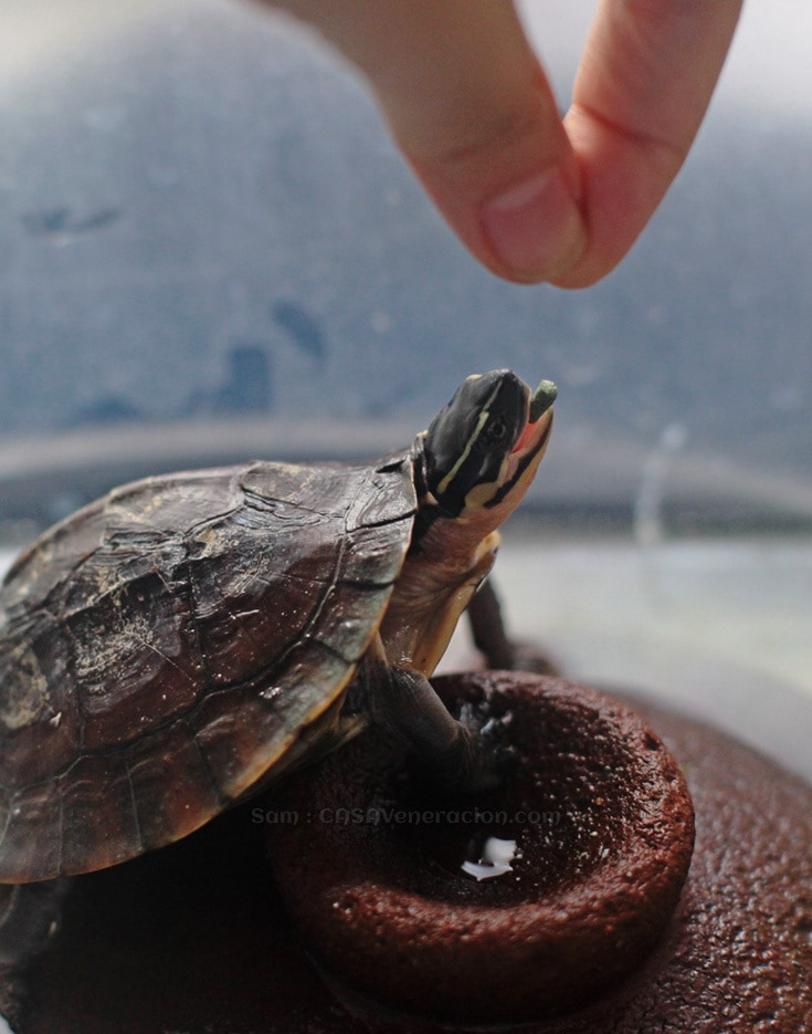 Hey, Mr. Turtle, what's your name again? | casaveneracion.com