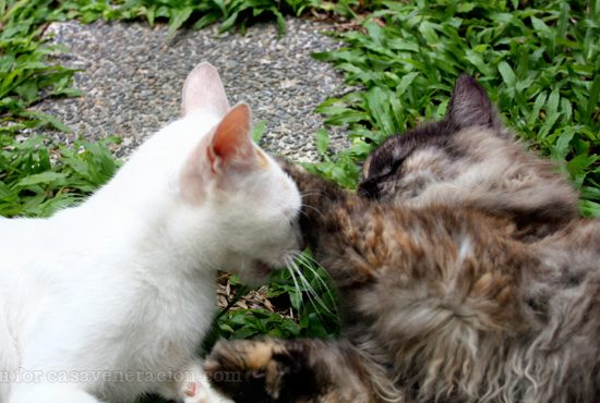 When cats show affection for one another just like humans do