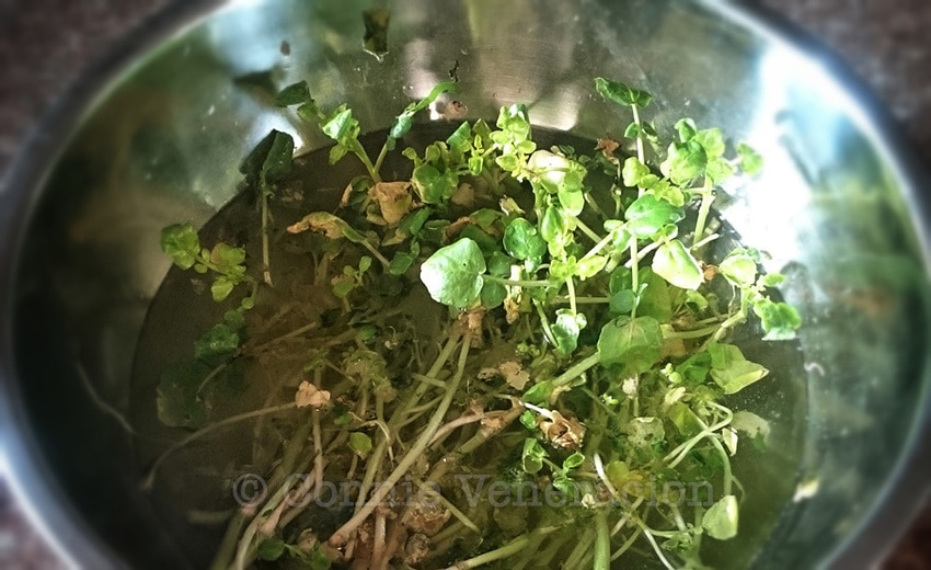 Did you know that you can grow watercress in your kitchen?