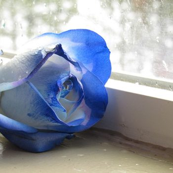 When Someone Gives You Blue Roses on Valentine's Day, What Does it Mean?