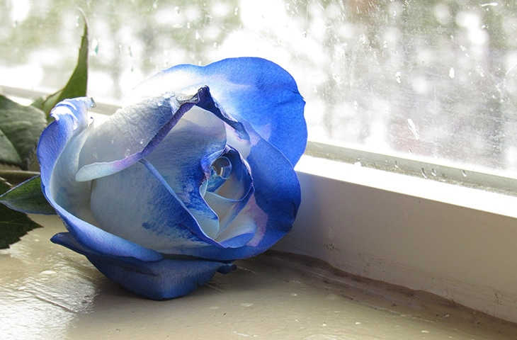 a bouquet of blue roses on valentine's day: what does it mean, Ideas