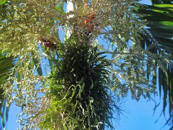 Fern on Palm Tree Trunk: Good or Bad?