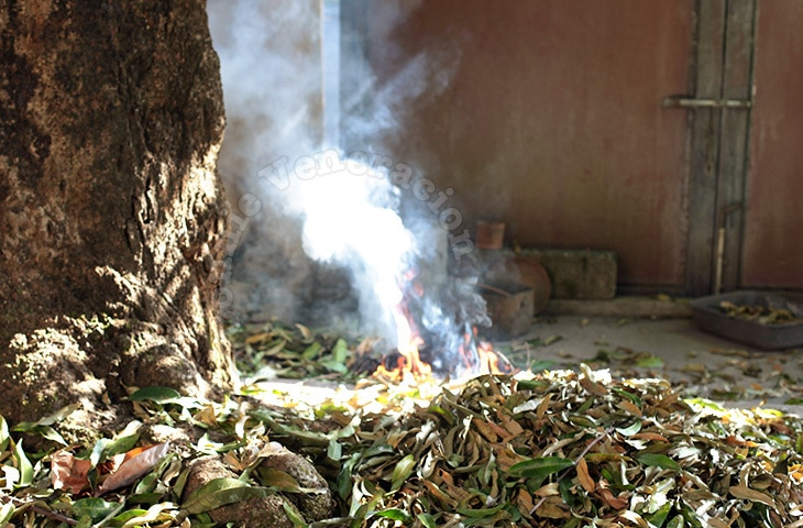 Use Your Vacuum Cleaner to Sweep Fallen Leaves in the Garden