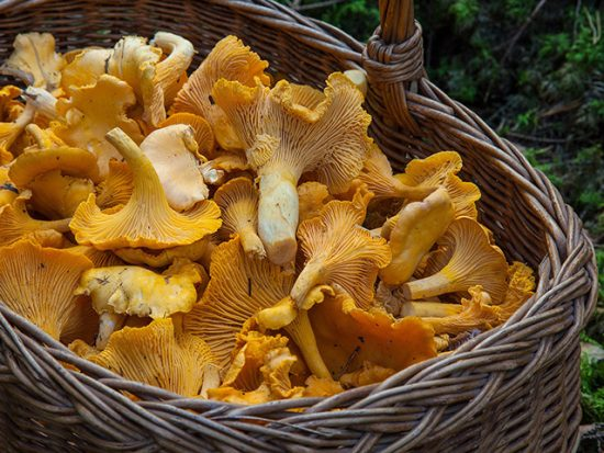 Edible Mushrooms 101: Types, Flavors and Preparation