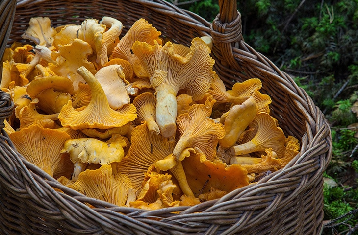 Edible Mushrooms 101: Types, Flavors and Preparation | casaveneracion.com