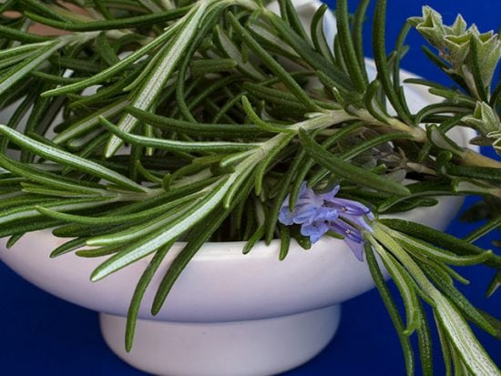 Rosemary: In the Garden, Kitchen and in Herbal Medicine