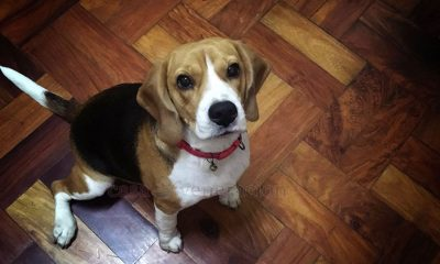 High-carb dog treats won't do your dog any good. We give our beagle, Penny, the healthiest and most natural dog treats. Fruits and veggies are the best.