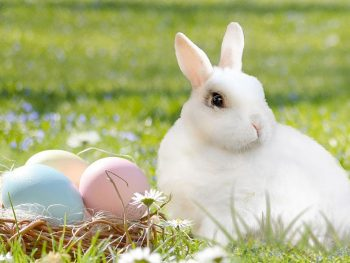 Did you know that Easter was originally a pagan festival that Christians adopted to associate with the resurrection of Jesus? Read the history of Easter, the Easter bunny and Easter eggs.