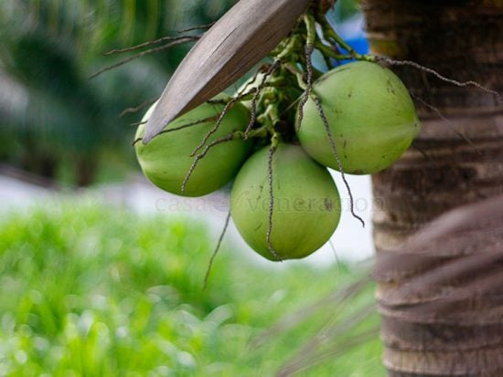 A Coconut Lover's Guide to Coconut Eats and Drinks